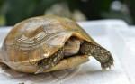 Linh vật rùa mang lại điềm lành và tài lộc - T.H.S